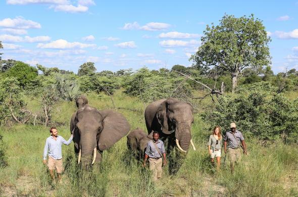 Botswana Elephant Safari Tour | Okavango Delta