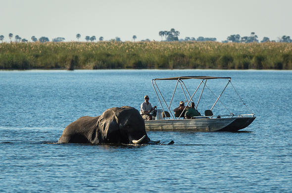 Elephant encounter on the Linyanti River. Duma Tau Camp