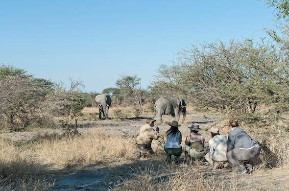 Elephant encounter at Wilderness Safaris