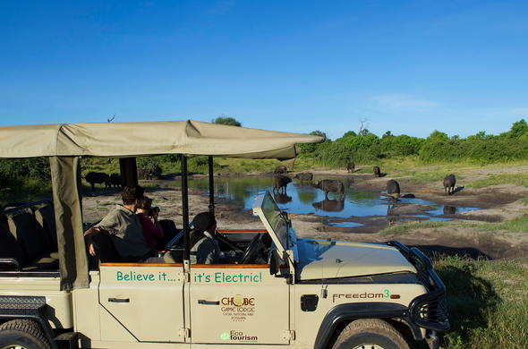 Exciting game drive spotting buffalos drinking water at a watering hole in Chobe.