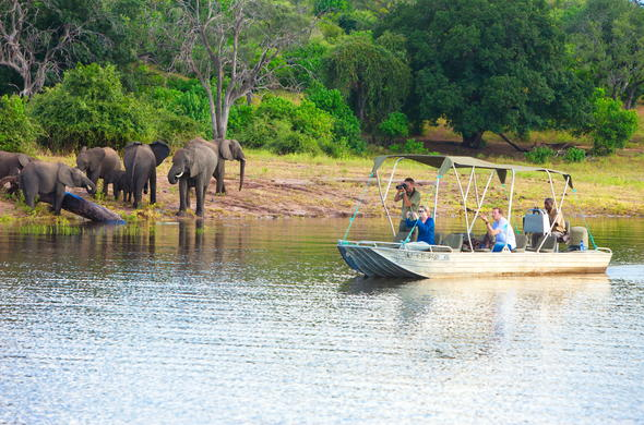 See Elephants on boat safari at Chobe Marina Lodge.