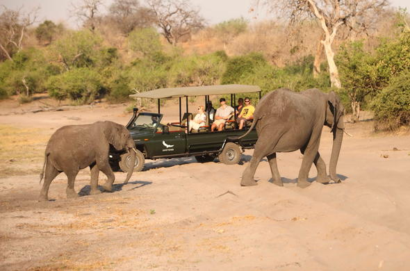 Chobe National Park off-road game drives promise close elephant encounters.