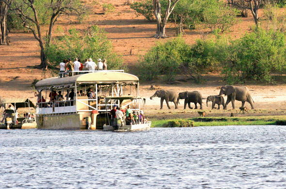Elephant sightings during a Chobe River boat safari cruise.