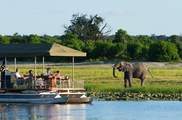 Elephant sighting during a Chobe River cruise safari.