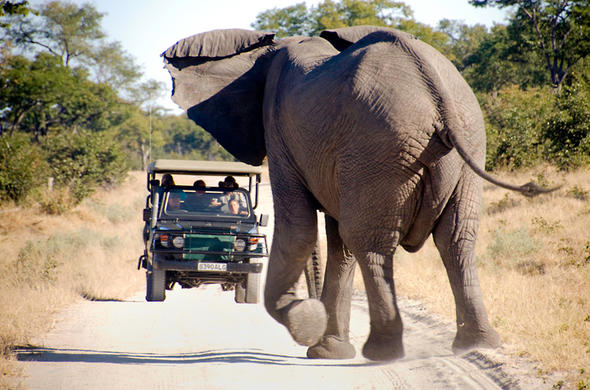 Elephant in the Traffic. Eco-Tours
