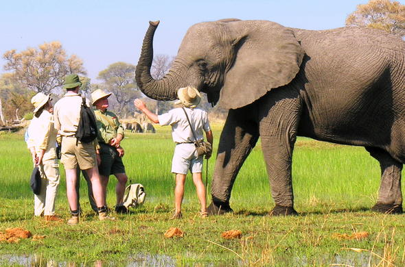 Elephant interaction in Botswana