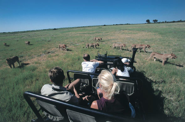 Safari on Duba Plains