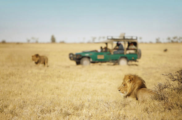 Safari from Camp Kalahari