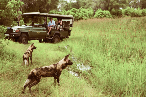 Wild dogs near Sekinda camp