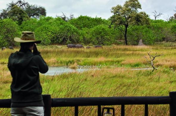 Game viewing from your safari lodge in Botswana.