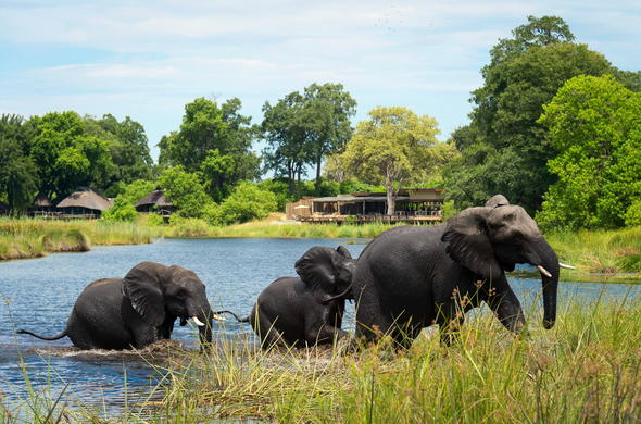 Elephants at Kings Pool Camp in Botswana.