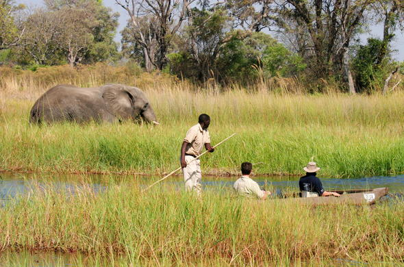 Moremi Game Reserve mokoro canoe excursion.