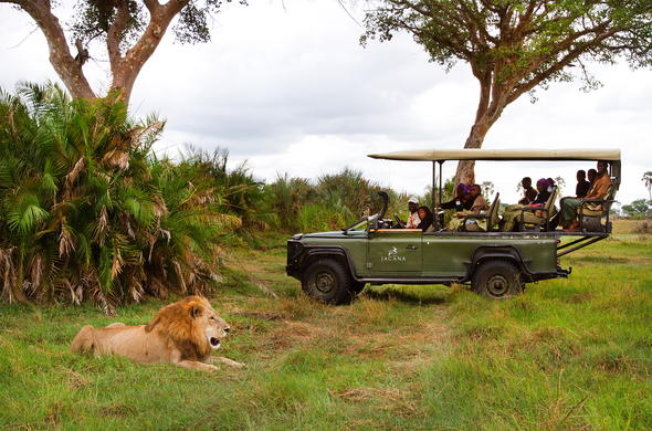 Spotting a lion during an afternoon game drive.