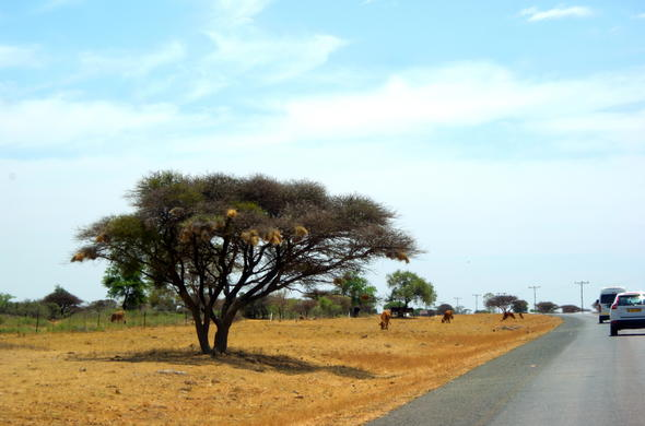 Road in Botswana from Francistown.