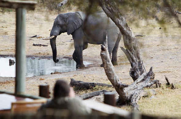 Elephant visiting a waterhole at Savite Safari Lodge