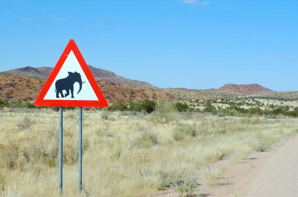 Watch out for elephants during your self-drive Botswana safari.