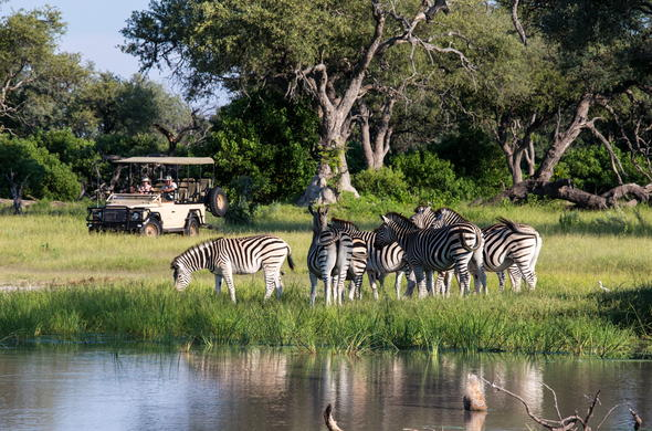 Amazing wildlife sightings during a game drive.