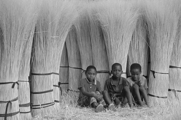 Young boys help to harvest papyrus. Ian Michler
