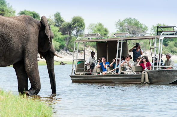 Boat safari on CHobe River with Zambezi Quuen